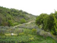 Buccino-sentiero