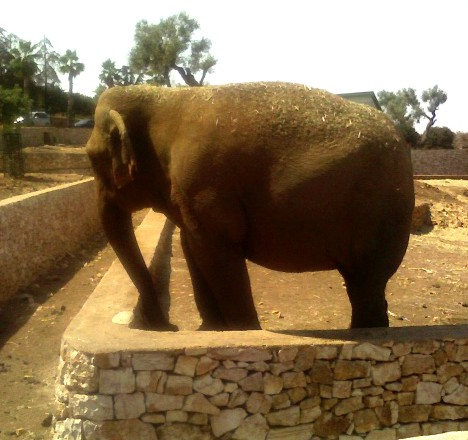 Blog fasano le emozionanti avventure nella natura - Immagini di animali dello zoo per bambini ...