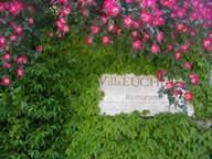 euchelia