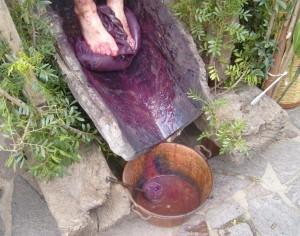 Una fase dell'estrazione dell'olio di lentisco