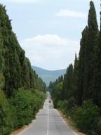 foto 1 Viale dei cipressi