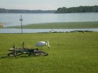 I cigni e il lago