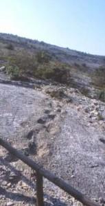 Impronte dei dinosauri