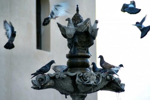 Castroreale - colombe assetate