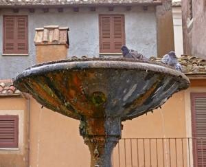 La toeletta dei piccioni