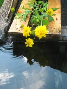 Fiori sulla fontana della nonna