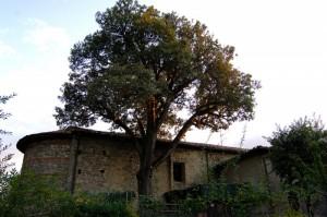 Abbazia S.Lucia di Roffeno