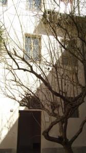 Albero della Sinagoga