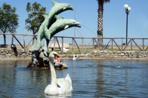 i delfini di Mirto