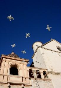 Basilica di San Francesco: le colombe della pace