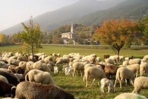 La chiesa ed il suo gregge