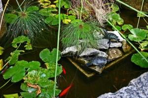 Tartarughe e pesci rossi a Villa Hambury