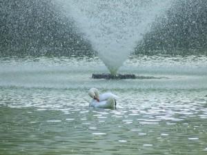 fontana nel parco di Genova