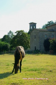 la chiesa e il cavallo