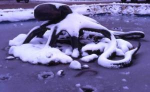 Un Polpo sotto la neve