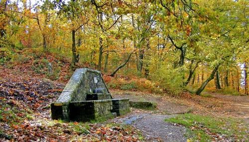 Bagno a Ripoli - la fontana nel bosco