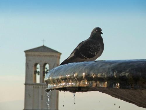 Assisi - Pretiosa et casta acqua