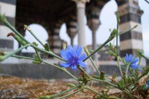 un fior…di chiesetta