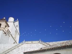 Basilica di S. Francesco: un senso di libertà