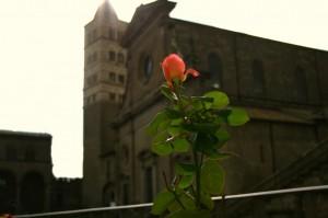 Omaggio a Rosa…e il suo Duomo