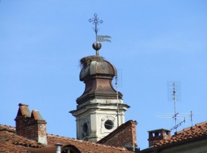 alle cicogne piace fare il nido sul campanile della Chiesa di Santa Croce