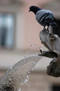 Fontana dei Fiumi (particolare)