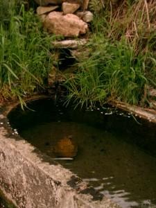 """""""acqua pura dalla fontanella"""""""
