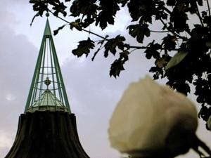 La rosa e la spina