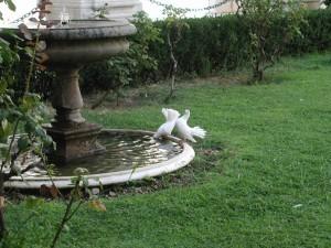 la fontana dell'Abbazia di Montecassino