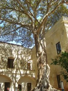 Albero del convento