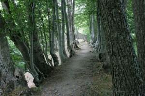 La via del Cimitero