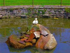 Fontana con cigni