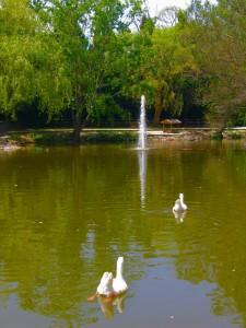 la fontana del cigni 2
