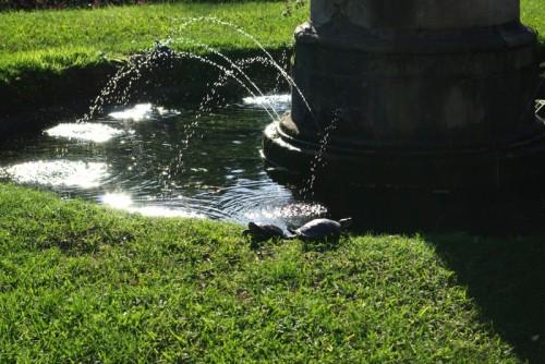 Livorno - La fontana delle tartarughe