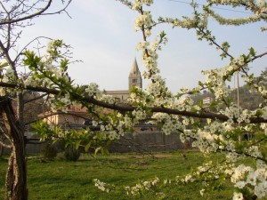 la basilica dei fieschi tra i prugni  in fiore