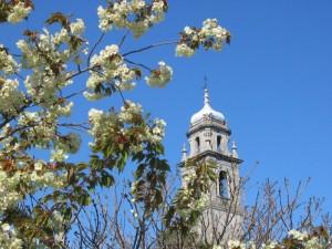 Primavera pallanzese