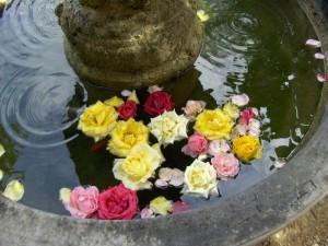 bagno di rose
