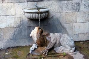 Ha sete il Felino