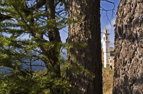 Macra - Sguardo tra gli alberi