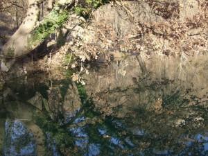 albero riflesso