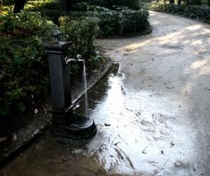 fontana nel bosco
