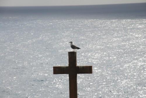 Bergeggi - gabbiano si riposa su croce