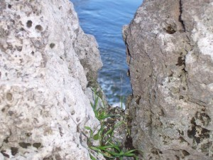 Fontanella tra le rocce