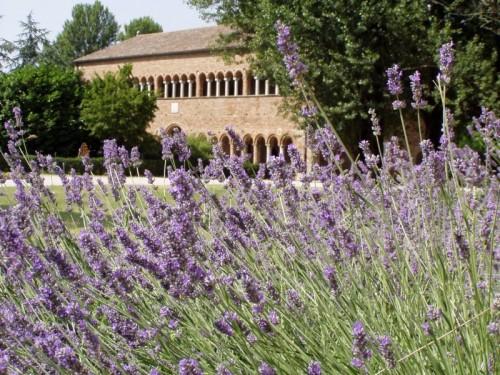 Codigoro - abbazia di pomposa