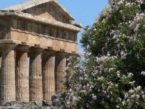 Il tempio di Nettuno tra gli oleandri