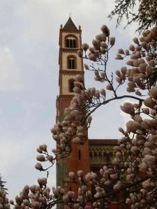 Profilo della Basilica di S.Andrea con magnolia
