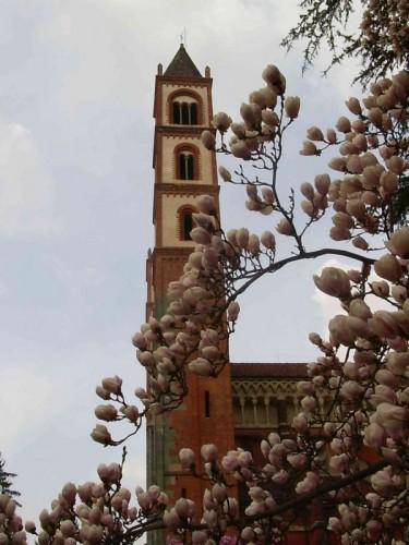 Vercelli - Profilo della Basilica di S.Andrea con magnolia