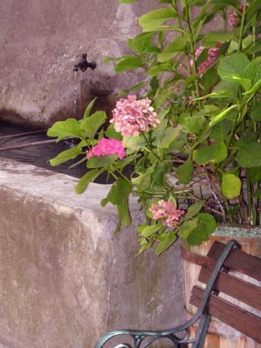 Pitigliano - Un rivolo quasi nascosto