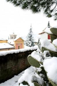 cactus sotto la neve