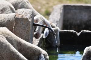 Fontana del rifugio fontanella